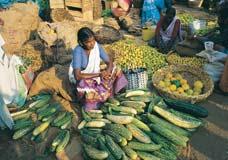 Indien Steckbrief